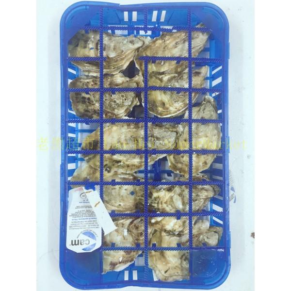 生蚝 (盒)