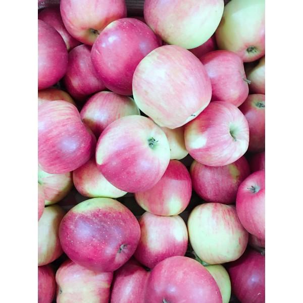 苹果(时令价格)