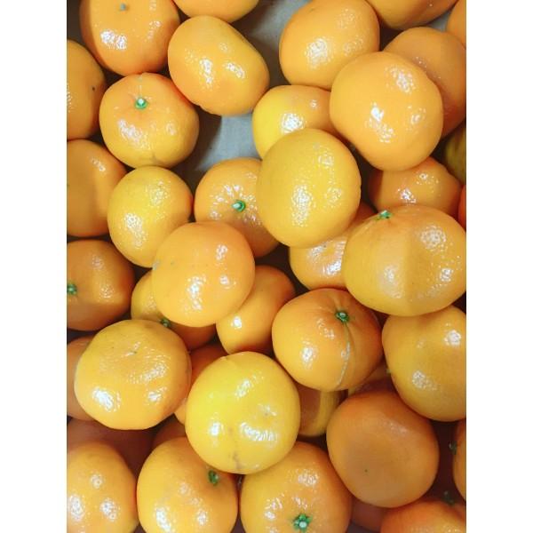 橘子(时令价格)