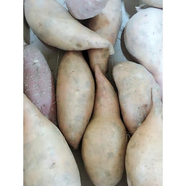 番薯(时令价格)